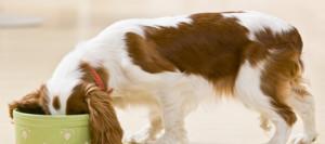 Hoboken Dog walkers, Hoboken Doggie Daycare, Puppy care.