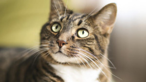 Hoboken Cat Sitter, Pet sitting in Hoboken,