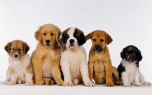 Hoboken Dog walkers, Hoboken Doggie Daycare, Hoboken pet sitters
