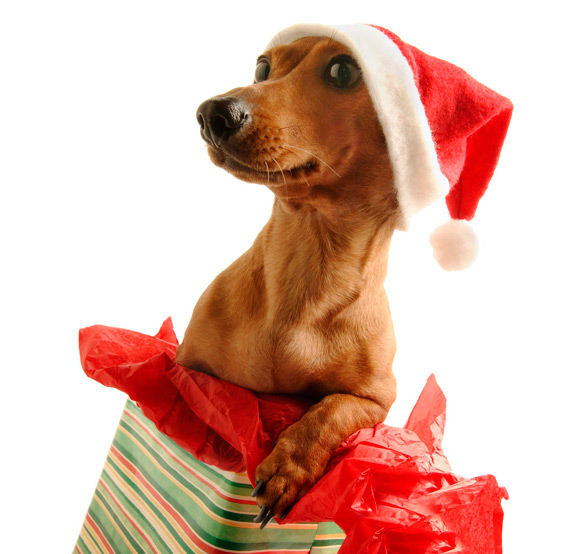 Doggie Christmas List | TrustyTails, Ever been clueless about what to get your dog for Christmas