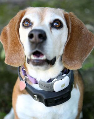 5 High Tech Accessories to Track Your Pet While Walking - Trustytails