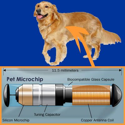 Should you Microchip your Pet? -