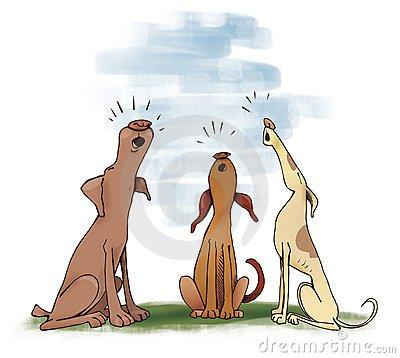 Why Do Dogs Howl? - Hoboken TrustyTails