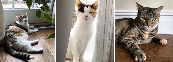 catsitting-trio