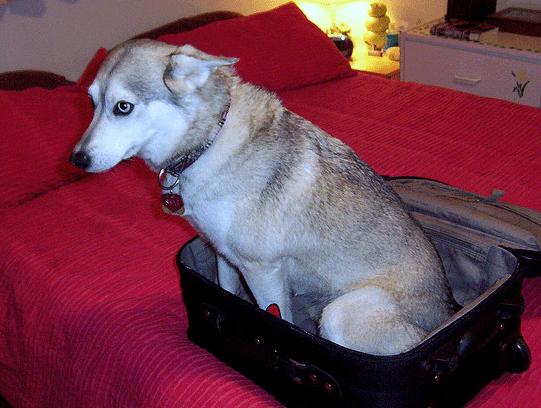 husky-vacation