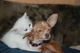 Do Dogs Get Along With Other Pets?