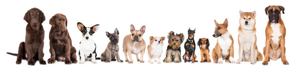 dogs-in-line-600px