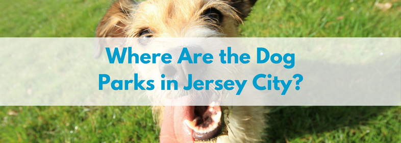 Where are the dog parks in Jersey city-
