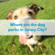 Where are the dog parks in jersey city?