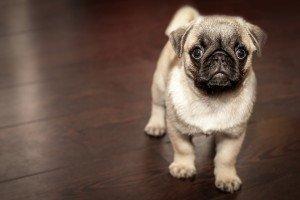 Glen Ridge Pet sitter
