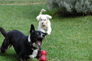 Montclair Dog Walker