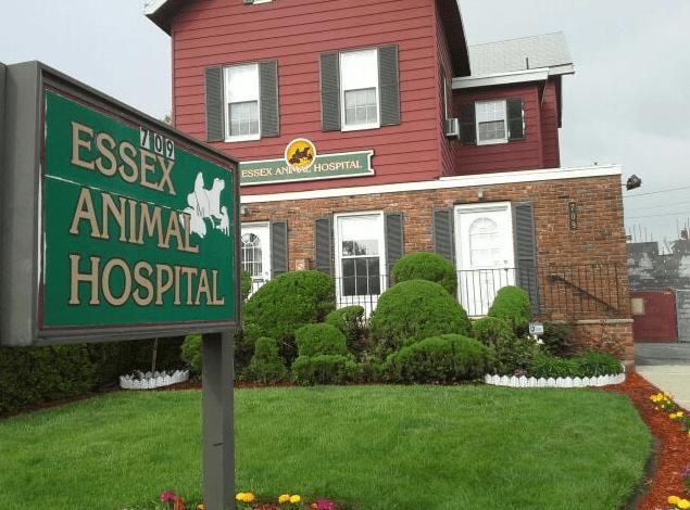 essex-animal-hospital