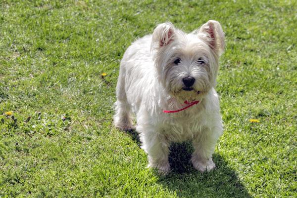 dog-1261278_1920