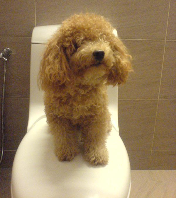 pup-on-toilet