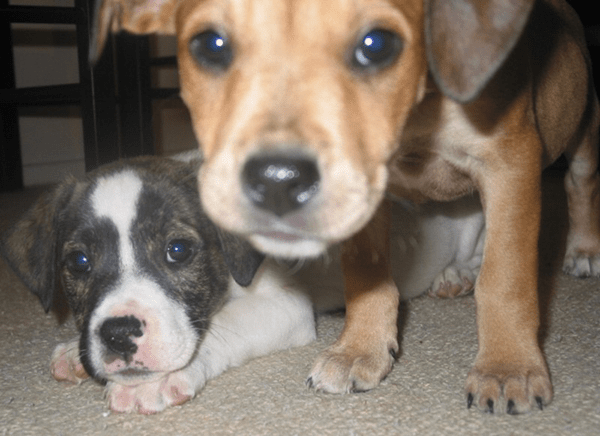 puppyfaces