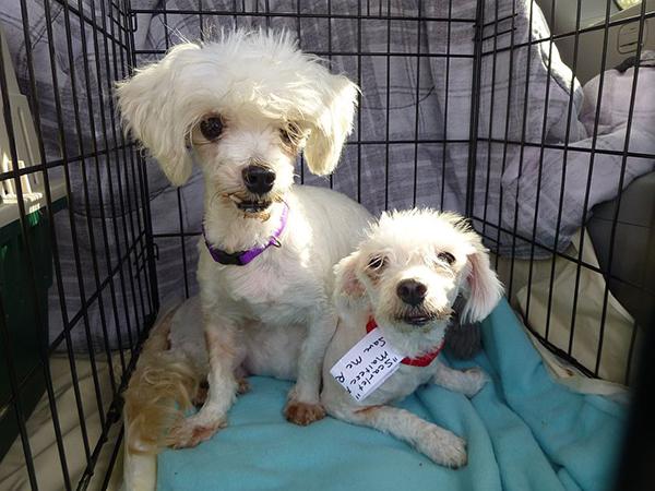 pups-in-crates