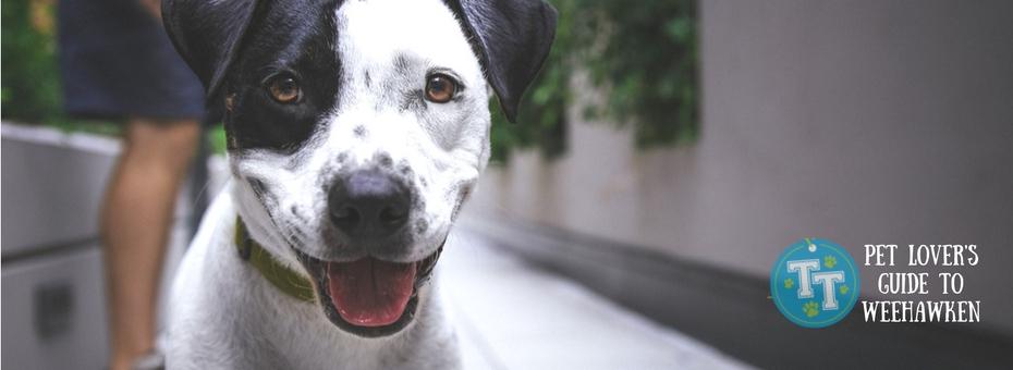 Weehawken Doggie Day Care & Boarding
