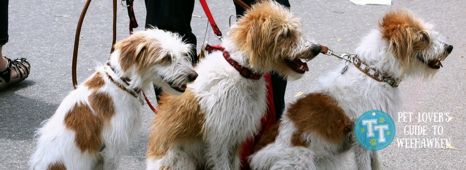 Weehawken Dog Walkers