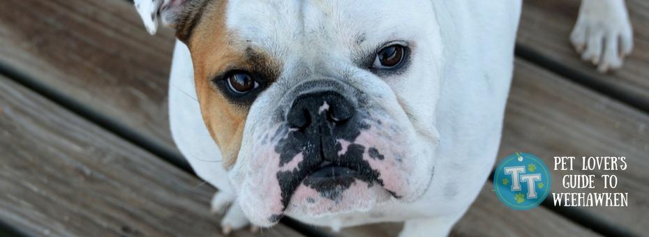 Weehawken Pet Friendly Hotels