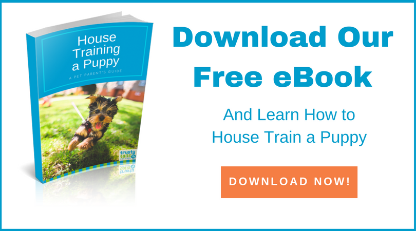 How To House Train A Puppy Free ebook
