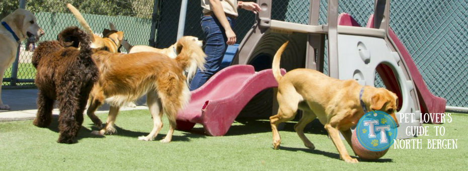 north bergen doggie day care boarding   trusty tails pet care
