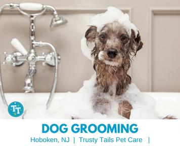 hoboken dog grooming