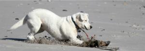 8th avenue dog beach - asbury park, nj