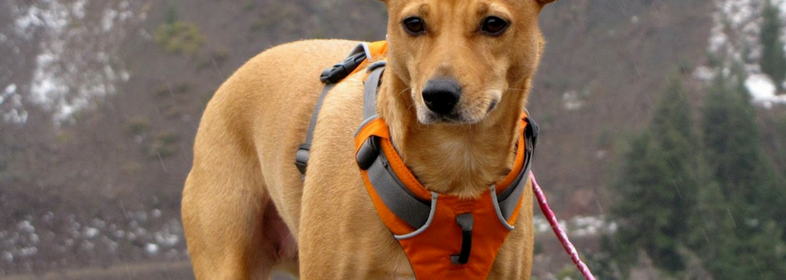 Ruff Wear Front Range Harness