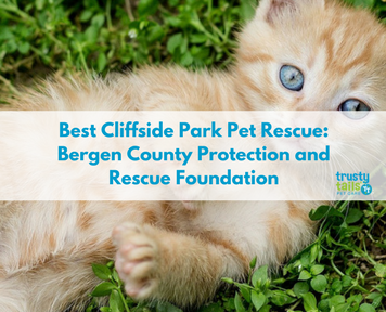 Best Cliffside Park Pet Rescue- Bergen County Protection and Rescue Foundation