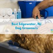 Best Edgewater NJ Dog Groomers 2