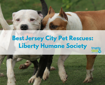Best Jersey City Pet Rescues- Liberty Humane Society