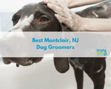 Best Montclair NJ Dog Groomers