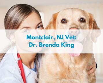 Montclair, NJ Vet - Dr Brenda King