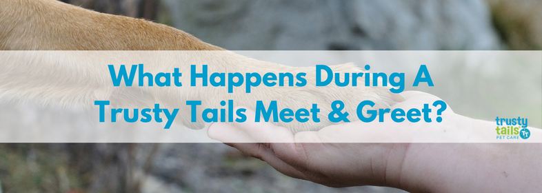 What happens during a trusty tails meet and greet-