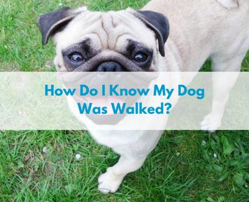how do i know my dog was walked