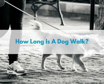 how long is a dog walk?