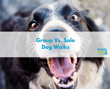 group dog walk vs solo dog walk