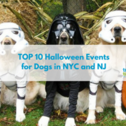 top 10 halloween events for dogs in nyc and nj