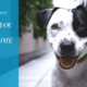 3 Reasons You Should Be Using In-Home Dog Care When You Travel
