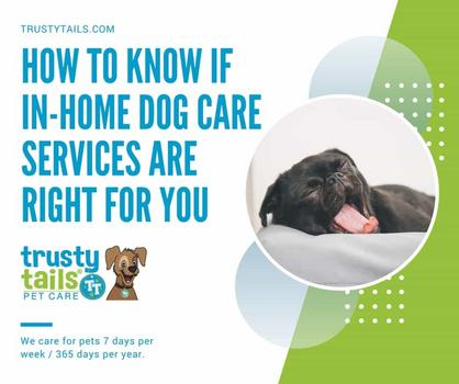 How To Know If In-Home Dog Care Services Are Right For You