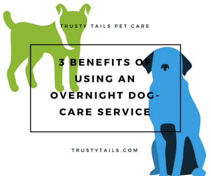 Three Benefits Of Using An Overnight Dog-Care Service